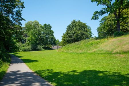 Park landscape. Summer green meadow with long lane
