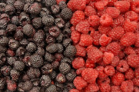 Blackberry and raspberry. Berries black and red background Foto de archivo - 150233100