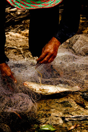 limnetic: hands taking fish out of a net Stock Photo