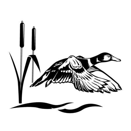 水の上を飛ぶアヒル、狩猟シーズン