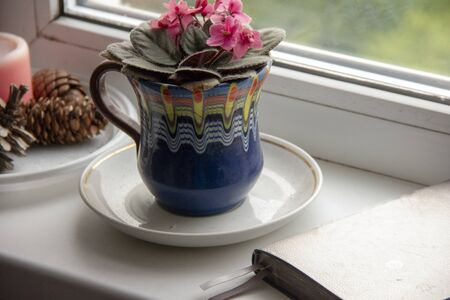 flower violet in a pot and a daily planner for planning the day on the windowsill.
