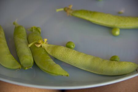 pods of green peas and peas lie on a blue plate