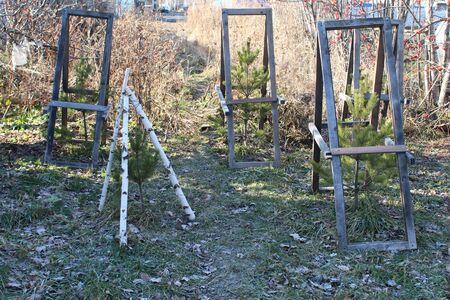 Newly planted street trees in winter. Tree fences Zdjęcie Seryjne
