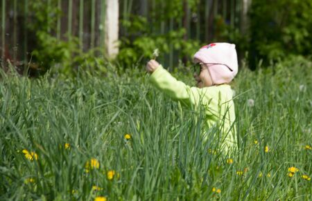 Little girl in a cap collects yellow dandelions in a clearing 写真素材 - 143237630