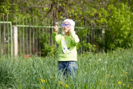 Little girl in a cap collects yellow dandelions in a clearing. 写真素材 - 143245183
