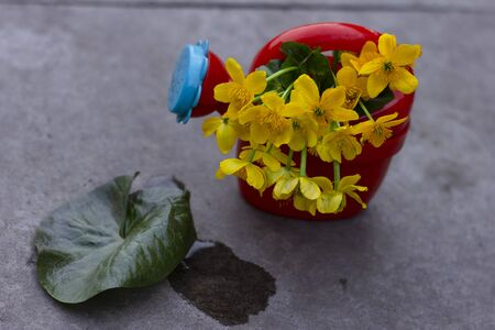 yellow flowers stand in a childrens toy red watering hole on a concrete background