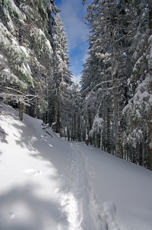 Snowpath through forest in winter