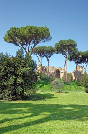 palatine: Palatine hill (Domus Severiana ruins) in Rome