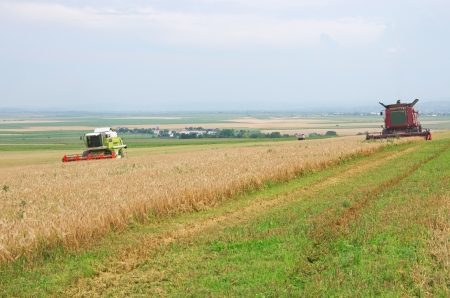 Harvest time, Combine harvester working in a cereal field photo