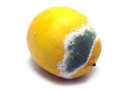 mouldy: Moulded lemon isolated on a white background Stock Photo