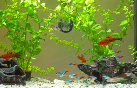 Decorative home aquarium with fishes and plants