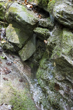 springwater: Natural water spring on the rock in the forest,