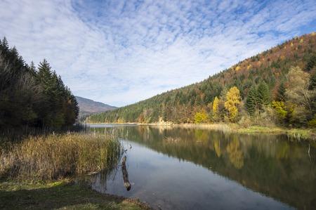 toter baum: Scout See mit toten Baum im Herbst