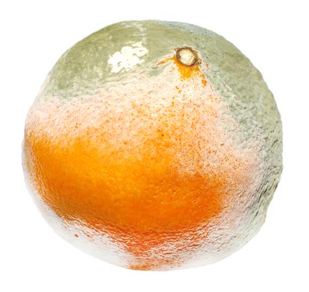 spoilage: Moldy orange isolated on a white background