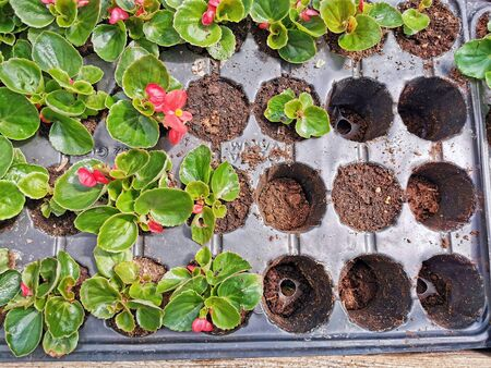 Empty and used plastic flower pots in seedling greenhouse. Stockfoto