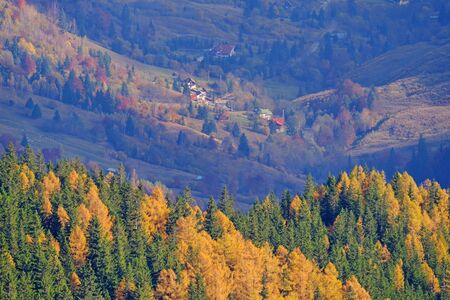 Autumn trees and village scene behind in Romanian Carpathians.