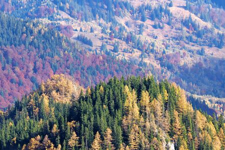 Autumn trees landscape in Romanian Carpathians, colorful forest background