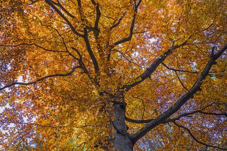 Golden forest tree on the mountain, autumn landscape
