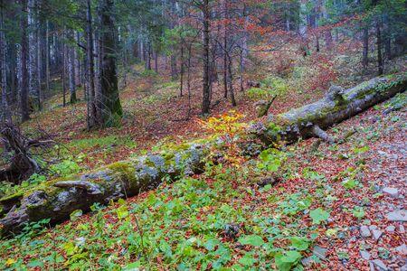 Fallen tree trunk in autumn forest, autumn landscape