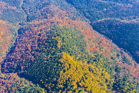 Autumn forest viewed from above in Romanian Carpathians. 스톡 콘텐츠