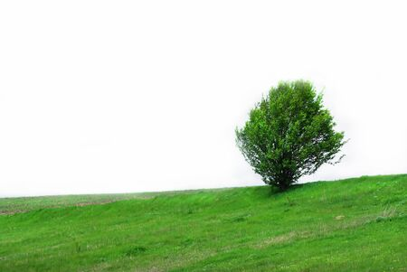 Single green tree on the grass isolated on white