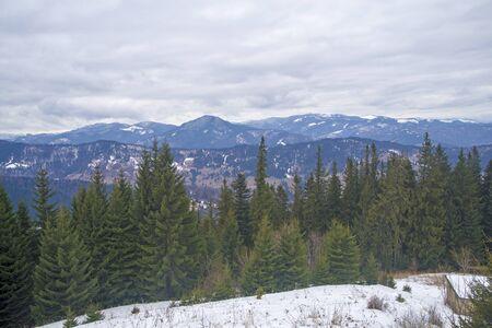 Green forest in a winter mountain landscape, Romanian Carpathians. Foto de archivo