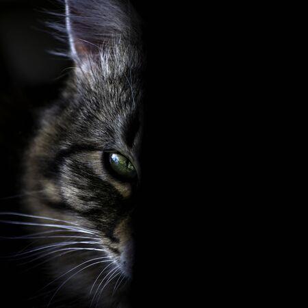 Cat eye isolated on black
