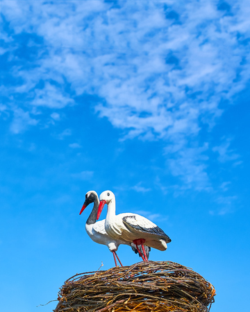 Statues of two storks. Statues of two storks in the nest on the blue sky background, sunny.