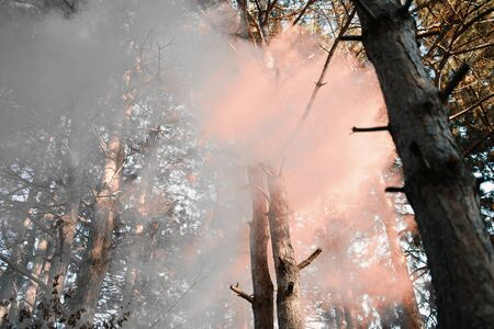 Smoke screen in the woods in the forest