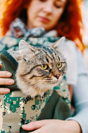 Tabby cat in a bag. A photograph of a girl who is on a walk with her cat. Stok Fotoğraf