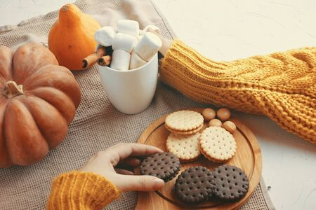 Pumpkin Cookies With Cups Of Coffee. Woman is holding cup of cocoa, close up photo of hands in warm sweater, pumpkin and chocolate cookies.
