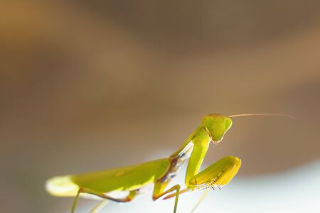 An insect on the street. The green grasshopper looks at the camera.