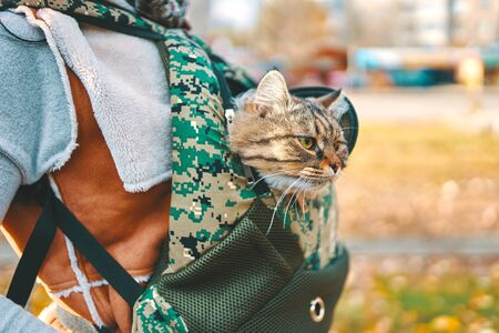 Tabby cat in a bag. Funny cat looks out of a backpack in the colors of the green on the back of a man