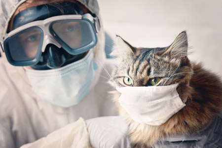 Veterinarian with a pet, pandemic in the world. Cat in protection mask. 免版税图像