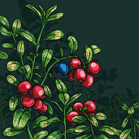 Bush cowberry with leaves on a dark green background