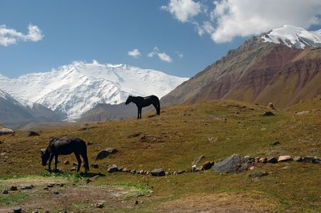 rockslide: Horses in the Base Camp 1, with the Lenin peak in background