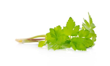 Green celery isolated on white background