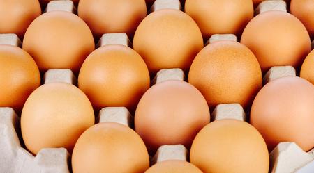 duck egg: Chicken Egg , egg