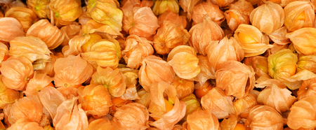 Cape gooseberry, physalis isolated, Cape gooseberry group background