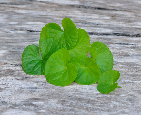 Centella asiatica, Asiatic Pennywort on wood background