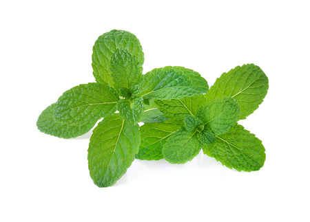 fresh mint leaves on a white background Imagens