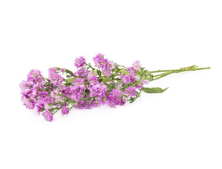 Pink flowers, small flowers on white background Stock Photo