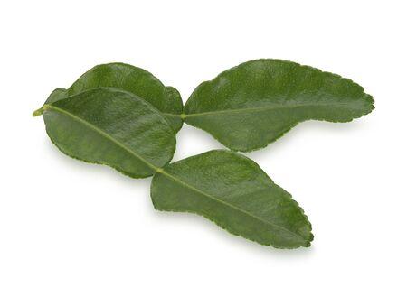 bergamot leaf on white background