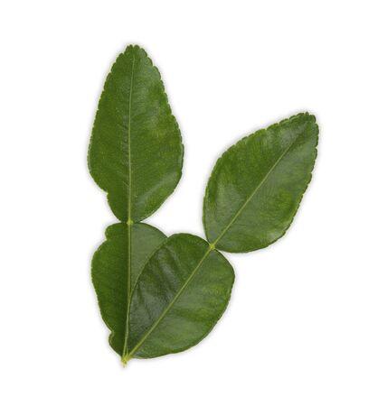 bergamot leaf on white background, Top view