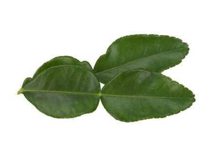 Green leaves, bergamot leaves, isolated on a white background