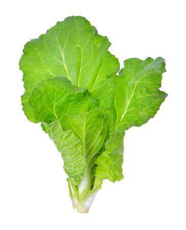Fresh lettuce over white background Stock Photo