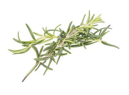Rosemary isolated on white background