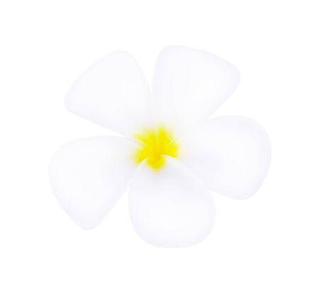 white frangipani tropical flower, plumeria flower blooming on white background Reklamní fotografie