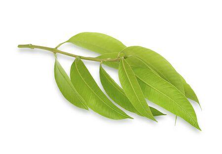 Fresh Marian Plum leaves, isolated on a white background Reklamní fotografie