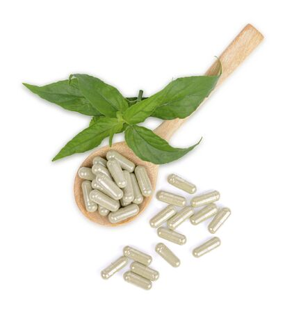 Andrographis Paniculata fresh herbs, plants and capsules in a wooden spoon Isolated on white background, top view